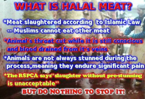 what-is-halal-capture