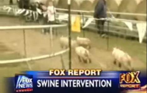 swine-intervention